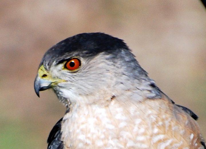 Fåglars syn